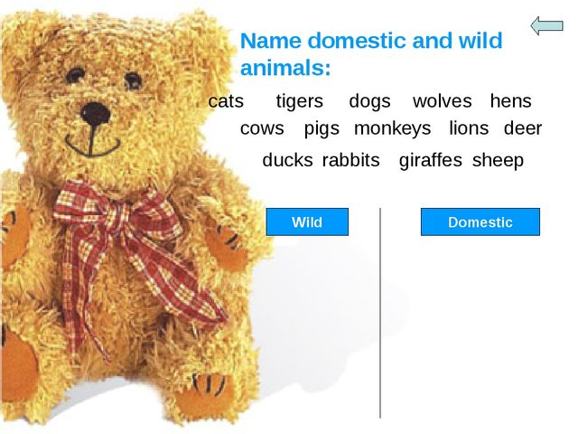 Name domestic and wild animals: cats tigers dogs wolves hens cows pigs monkey...