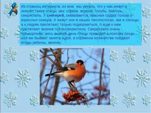 Из страниц интернета, из книг мы узнали, что у нас живут и зимуют такие птицы