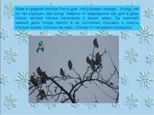 Зима в средней полосе Росси для птиц бывает разная.. Холод им не так страшен,