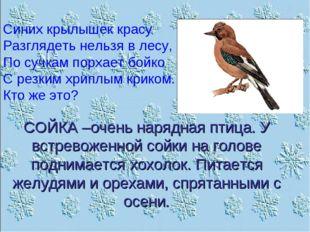 Синих крылышек красу Разглядеть нельзя в лесу, По сучкам порхает бойко С резк