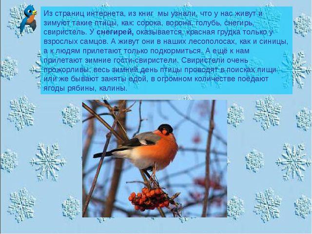 Из страниц интернета, из книг мы узнали, что у нас живут и зимуют такие птицы...