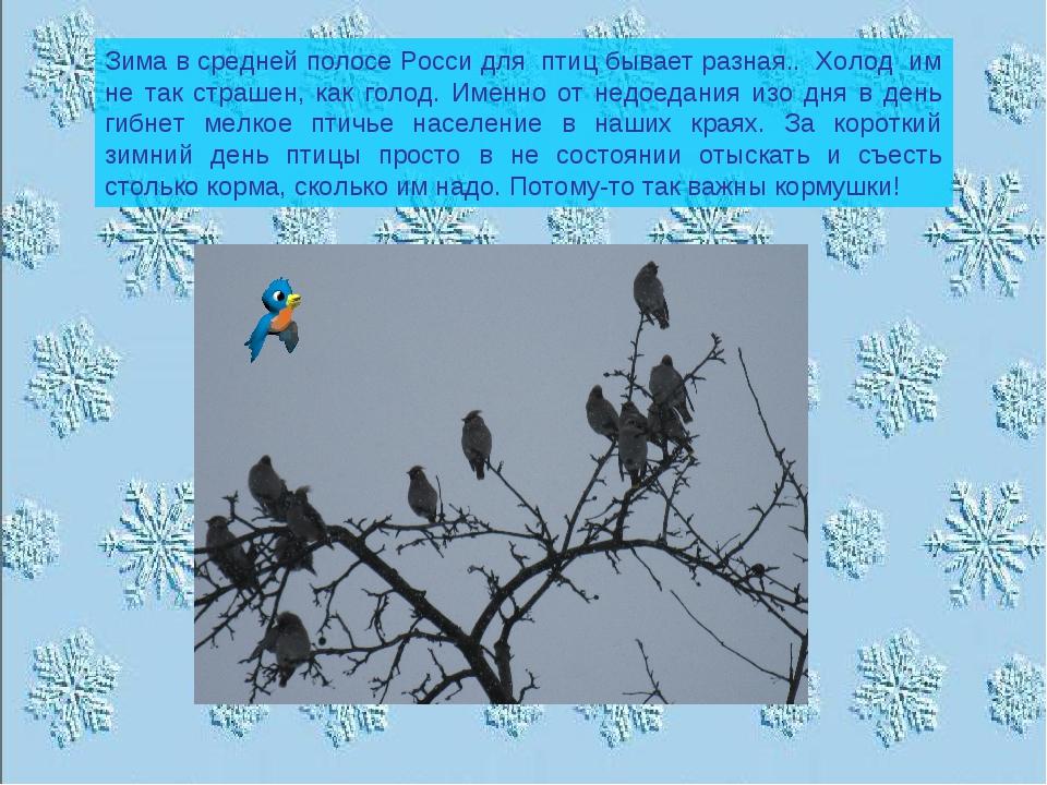 Зима в средней полосе Росси для птиц бывает разная.. Холод им не так страшен,...