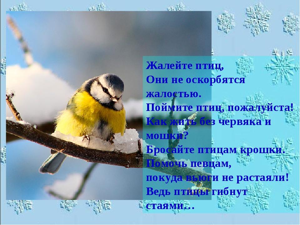 Жалейте птиц, Они не оскорбятся жалостью. Поймите птиц, пожалуйста! Как жить...