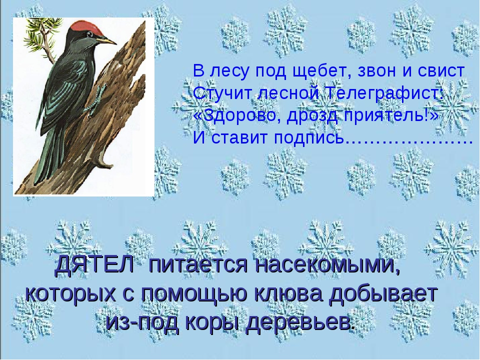 В лесу под щебет, звон и свист Стучит лесной Телеграфист: «Здорово, дрозд при...