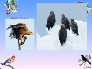 Орлан- белохвост Valya