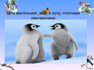 Эти маленькие, ещё в пуху, птенчики пингвинчики. Эти маленькие, ещё в пуху,