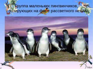 Группа маленьких пингвинчиков, позирующих на фоне рассветного неба Valya