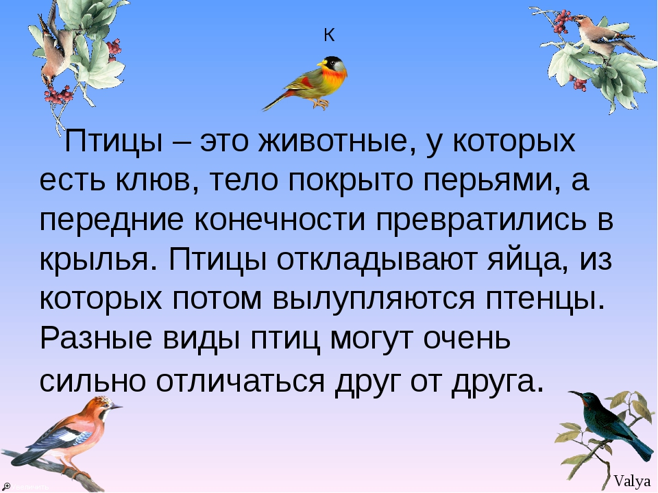 К Птицы – это животные, у которых есть клюв, тело покрыто перьями, а передние...
