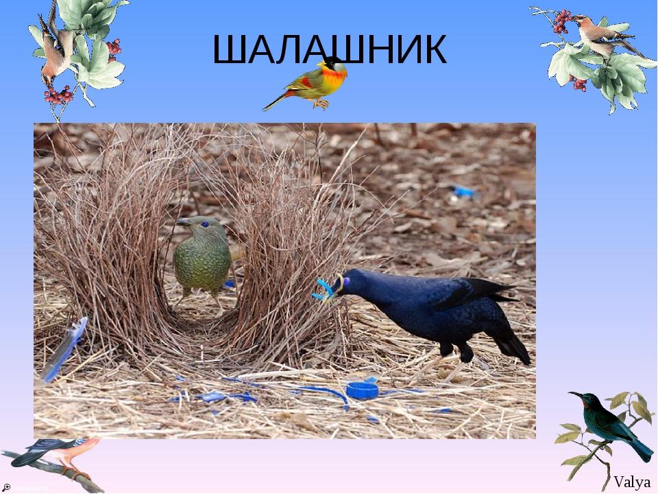 ШАЛАШНИК Valya