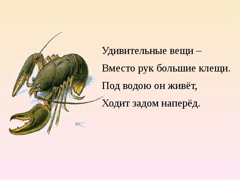 Удивительные вещи – Вместо рук большие клещи. Под водою он живёт, Ходит задо...