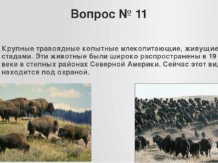 Вопрос № 11 Крупные травоядные копытные млекопитающие, живущие стадами. Эти ж