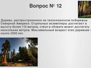 Вопрос № 12 Дерево, распространенное на тихоокеанском побережье Северной Амер