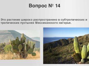 Вопрос № 14 Это растение широко распространено в субтропических и тропических
