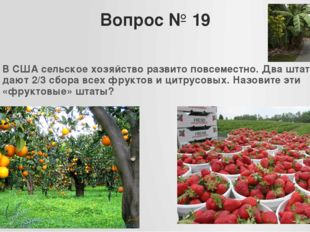 Вопрос № 19 В США сельское хозяйство развито повсеместно. Два штата дают 2/3