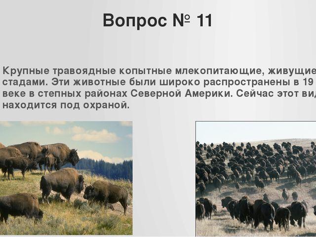 Вопрос № 11 Крупные травоядные копытные млекопитающие, живущие стадами. Эти ж...