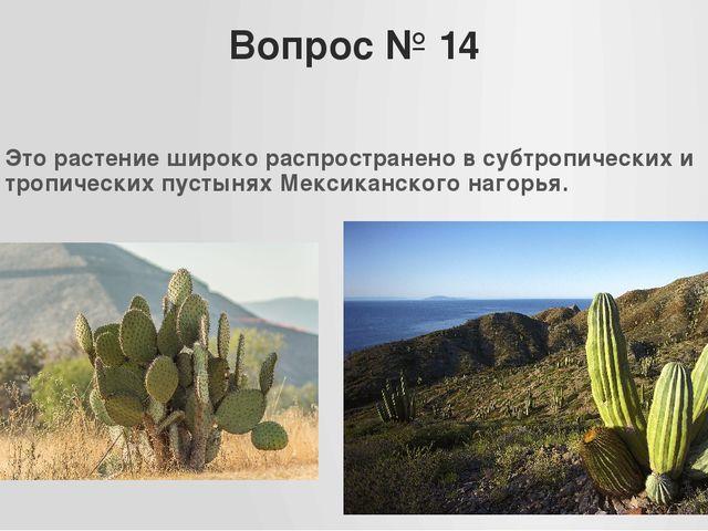 Вопрос № 14 Это растение широко распространено в субтропических и тропических...