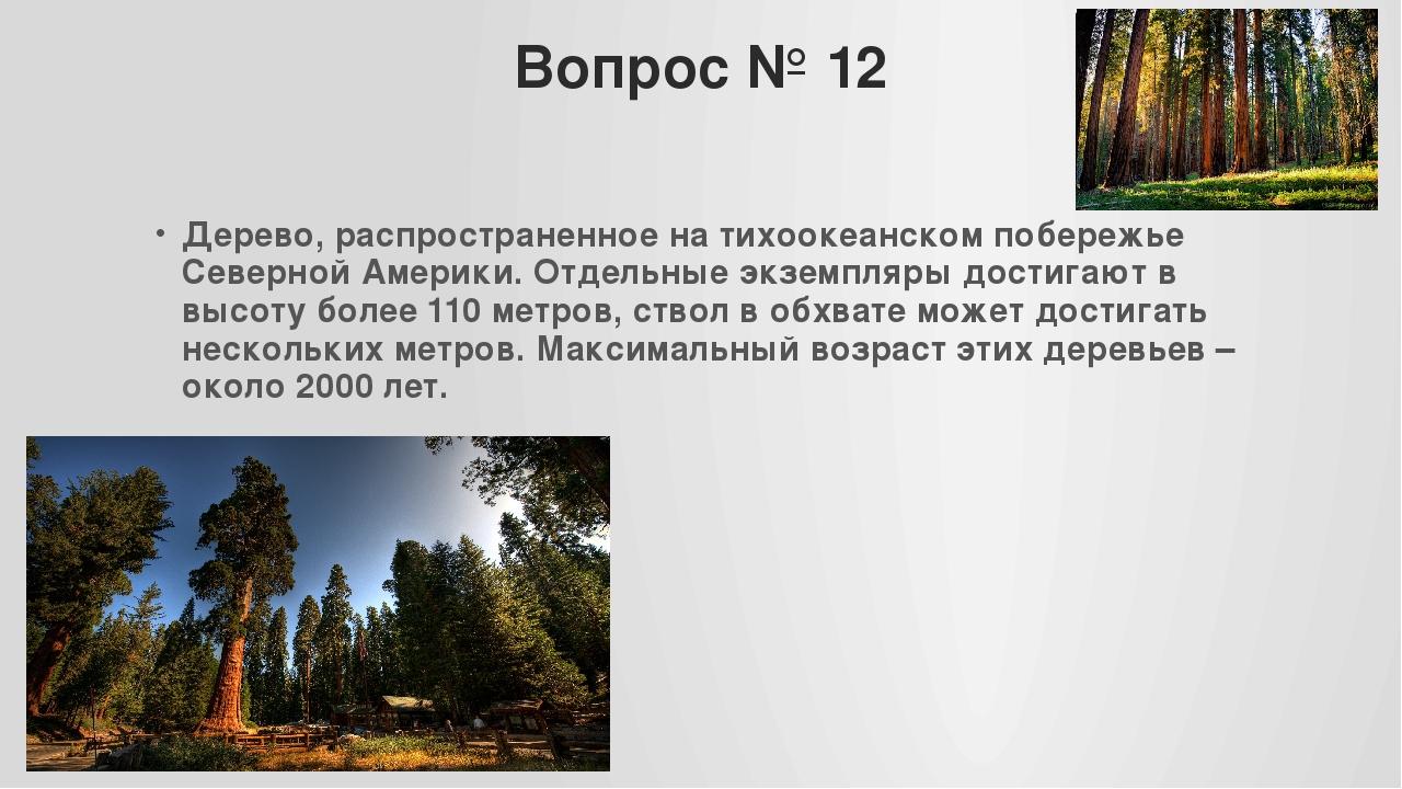 Вопрос № 12 Дерево, распространенное на тихоокеанском побережье Северной Амер...