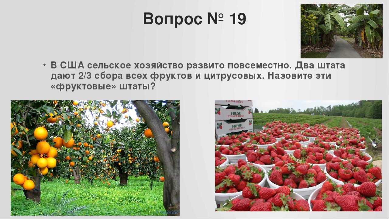 Вопрос № 19 В США сельское хозяйство развито повсеместно. Два штата дают 2/3...