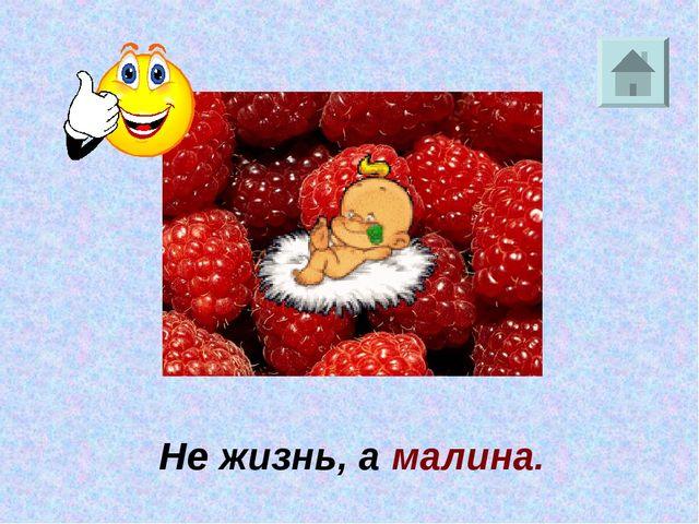 Не жизнь, а малина.