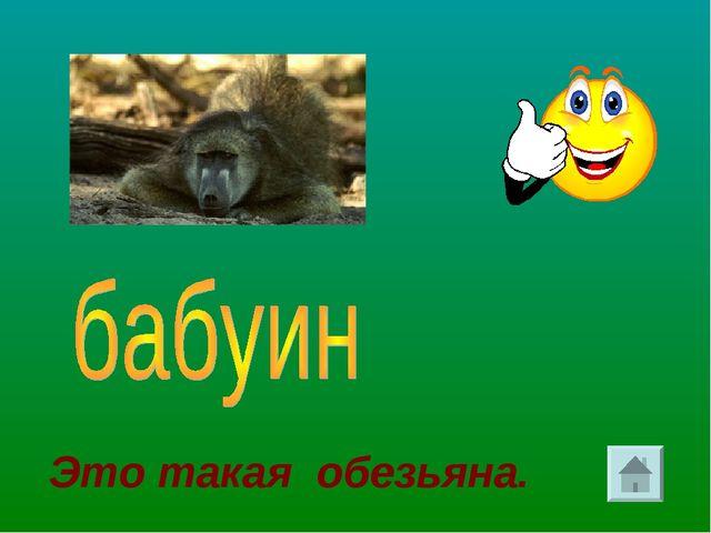 Это такая обезьяна.
