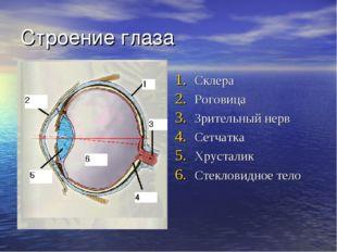 Строение глаза Склера Роговица Зрительный нерв Сетчатка Хрусталик Стекловидно