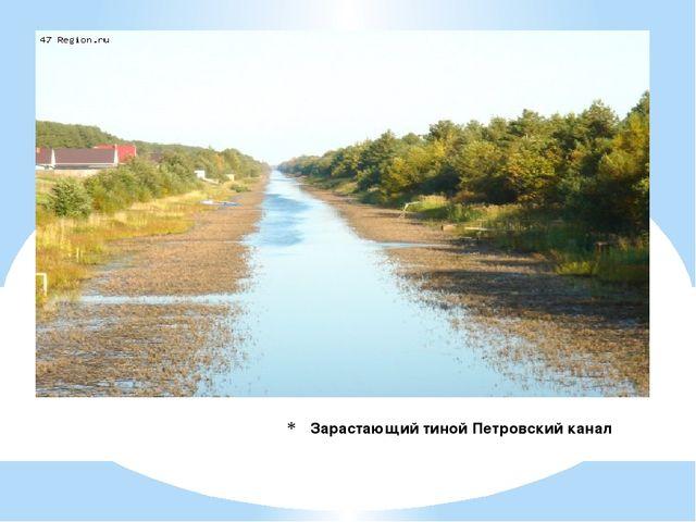 Зарастающий тиной Петровский канал