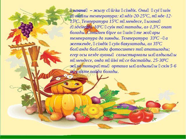 Қызанақ – жылу сүйгіш өсімдік. Оның өсуі үшін оңтайлы температура: күндіз-20-...