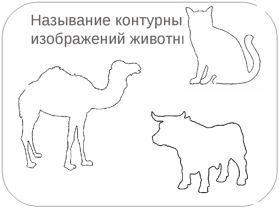 Называние контурных изображений животных