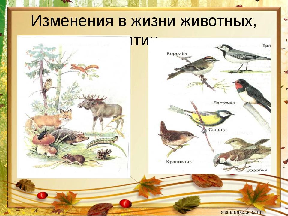 Изменения в жизни животных, птиц.
