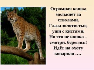 Огромная кошка мелькнёт за стволами, Глаза золотистые, уши с кистями, Но это
