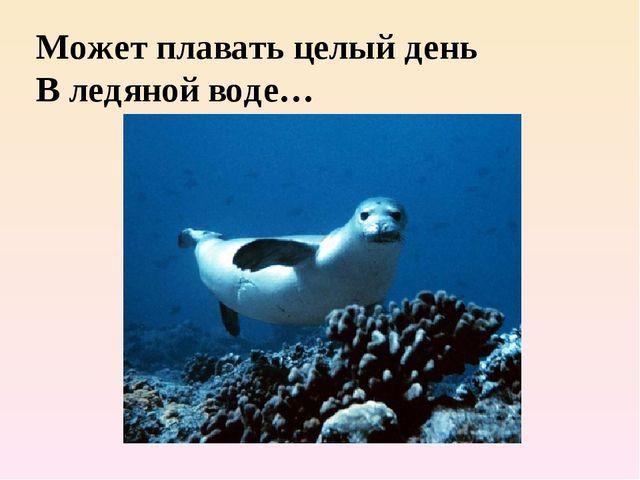 Может плавать целый день В ледяной воде…