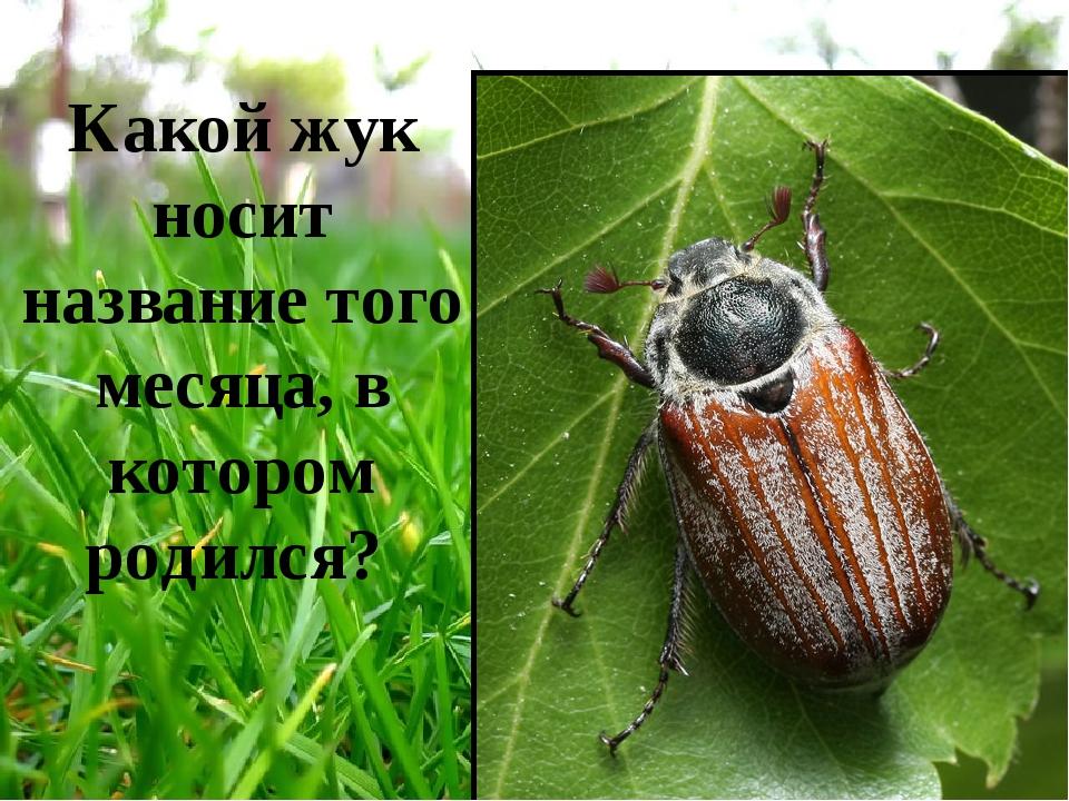 Какой жук носит название того месяца, в котором родился?
