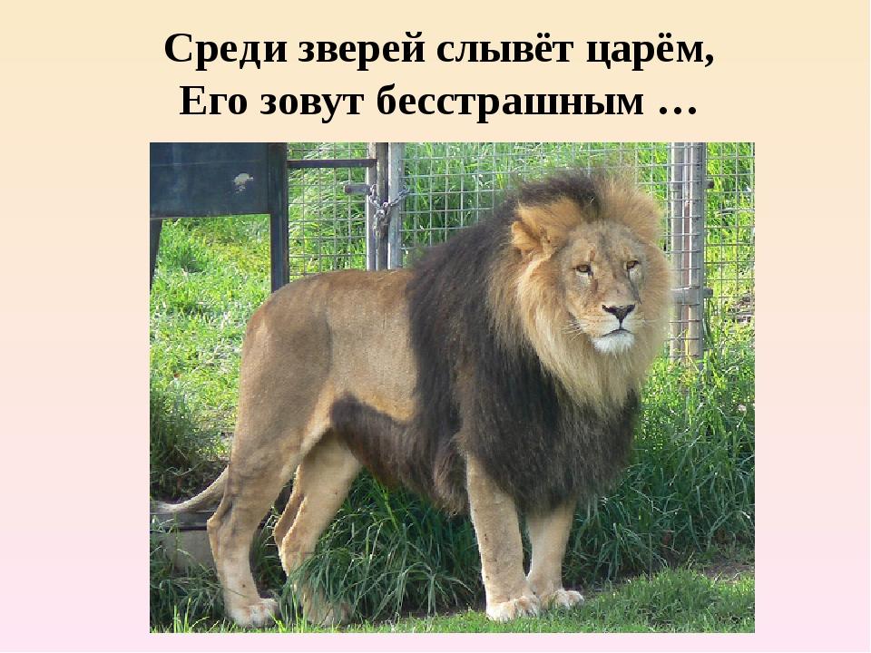 Среди зверей слывёт царём, Его зовут бесстрашным …