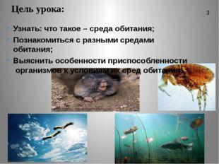 Цель урока: Узнать: что такое – среда обитания; Познакомиться с разными среда