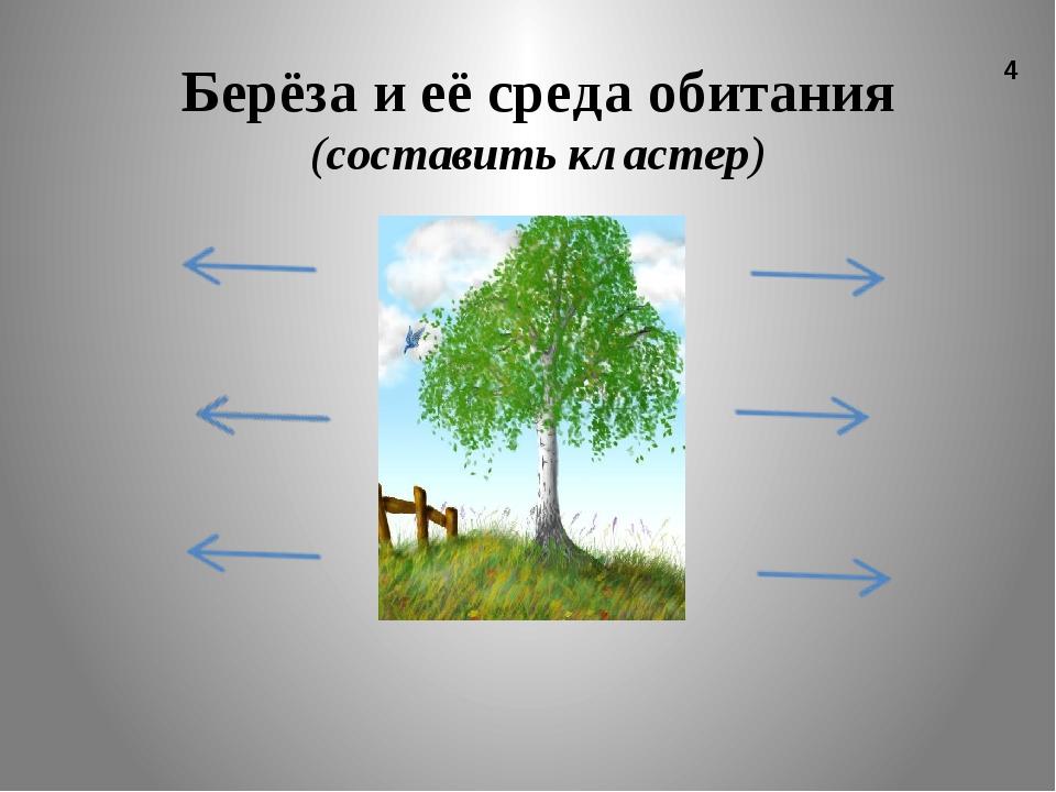 Берёза и её среда обитания (составить кластер) 4