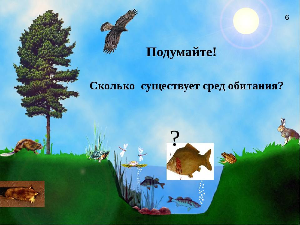 Сколько существует сред обитания?   Подумайте! ? 6