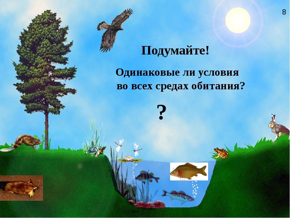 Одинаковые ли условия во всех средах обитания?   Подумайте! ? 8