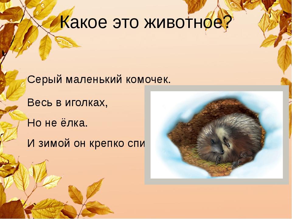 Какое это животное? Серый маленький комочек. Весь в иголках, Но не ёлка. И зи...