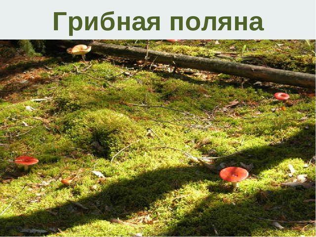 Грибная поляна