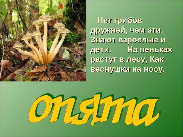 Нет грибов дружней, чем эти. Знают взрослые и дети. На пеньках растут в лесу...
