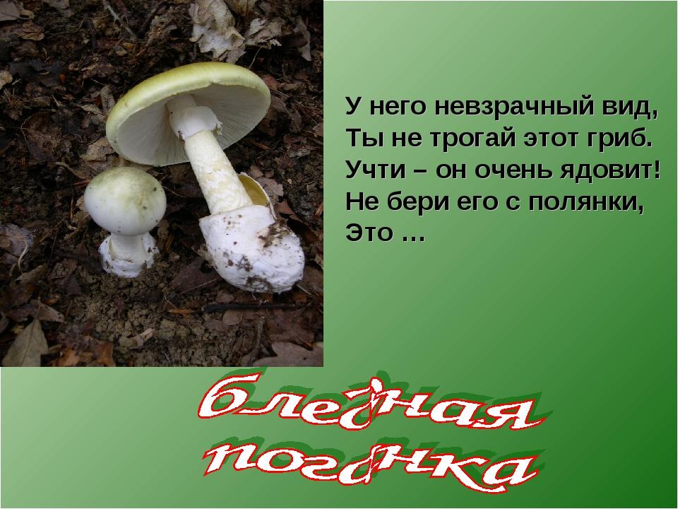 У него невзрачный вид, Ты не трогай этот гриб. Учти – он очень ядовит! Не бер...