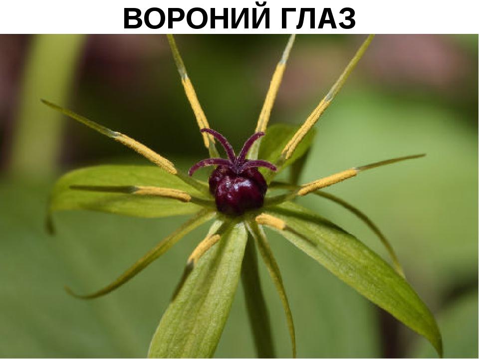 ВОРОНИЙ ГЛАЗ