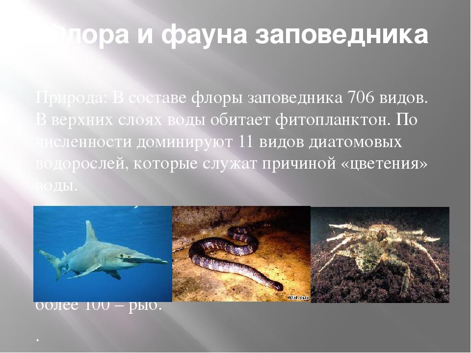 Флора и фауна заповедника Природа: В составе флоры заповедника 706 видов. В в...