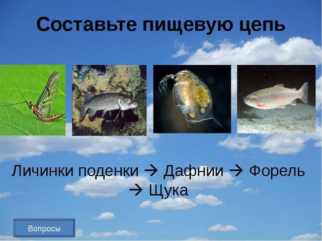 Назовите самую большую экосистему. Биосфера Вопросы