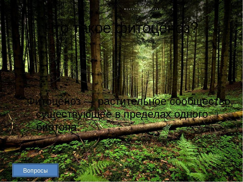 Вопросы Почему экосистему смешанного леса считают более устойчивой, чем экоси...
