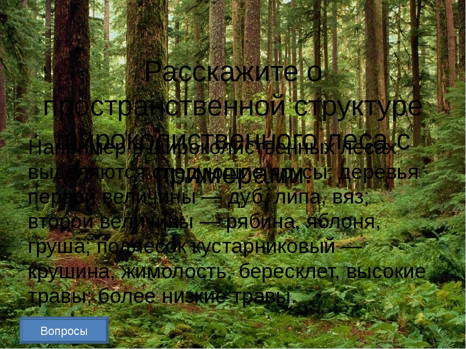 Какую роль играют птицы в биоценозе леса? Приведите не менее трёх примеров....