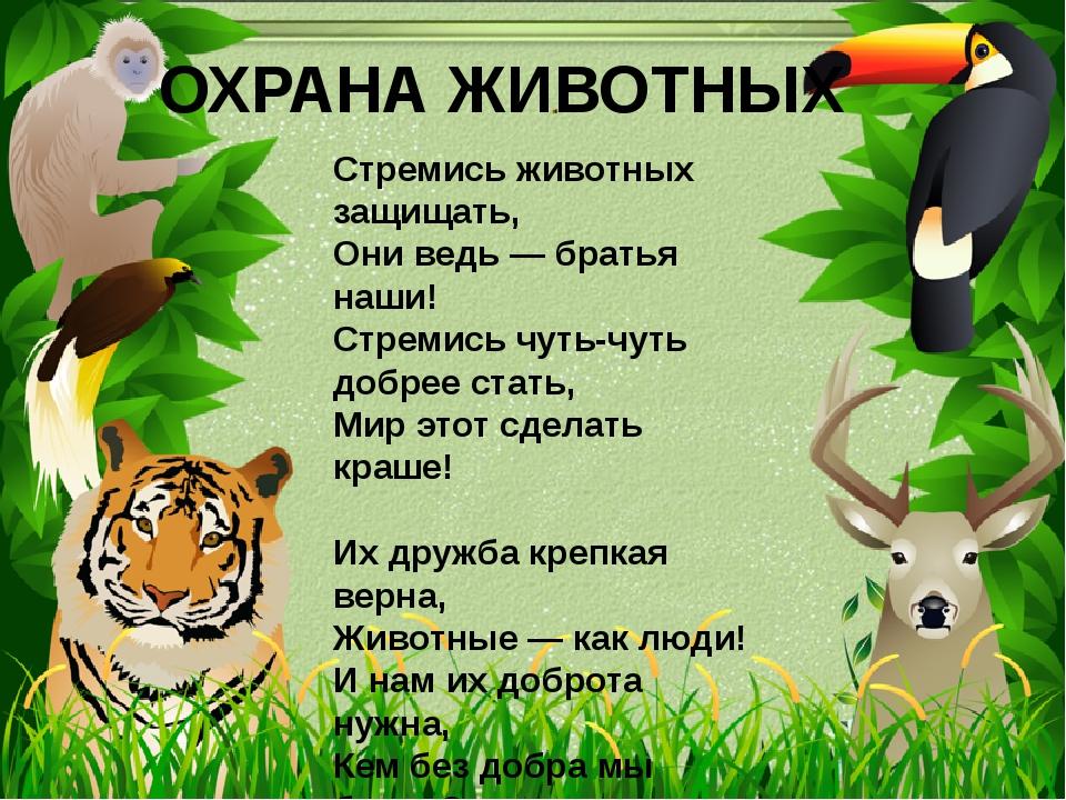 """Презентация по окружающему миру по теме """"Охрана животных"""" (3 класс)."""