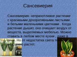 Сансевиерия Сансевиерия- неприхотливое растение с красивыми декоративными лис