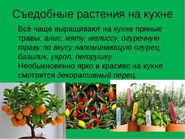 Съедобные растения на кухне Всё чаще выращивают на кухне пряные травы:анис,...