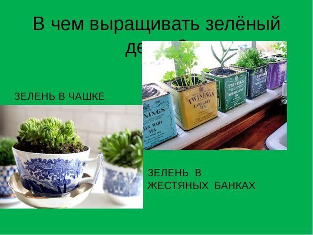 В чем выращивать зелёный декор? ЗЕЛЕНЬ В ЖЕСТЯНЫХ БАНКАХ ЗЕЛЕНЬ В ЧАШКЕ